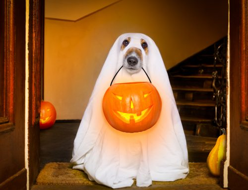 No Tricks, Only Treats: Halloween from Your Pets' Points of View